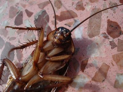 scarafaggi in casa? scegli Ecosanit